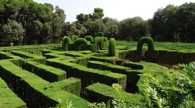 Hedge Maze